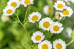 Can Seasonal Allergies Cause Joint Pain?